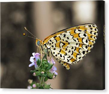 Canvas Print featuring the photograph Like A Flying Tiger by Meir Ezrachi
