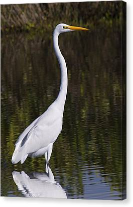 Like A Great Egret Monument Canvas Print by John M Bailey