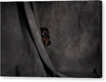 Curtains Canvas Print - Like A Thief In The Night... by Heike Willers