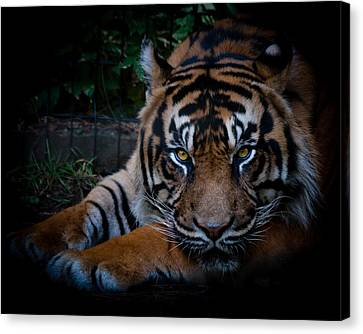 Like My Eyes? Canvas Print by Robert L Jackson