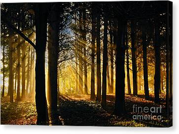 Like The First Morning Canvas Print