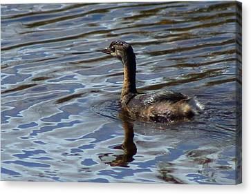 Lil Duck Canvas Print by Rhonda Humphreys