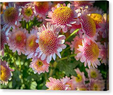 Lil' Mums Canvas Print by Phil Abrams