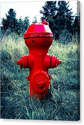 Lil Red Canvas Print by Ronda Broatch