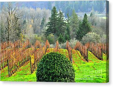 Li'l Vineyard Canvas Print by Tonia Noelle
