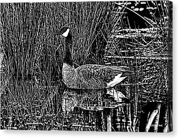 Lila Goose The Pond Queen Hdr Grass Art Bw Canvas Print by Lesa Fine