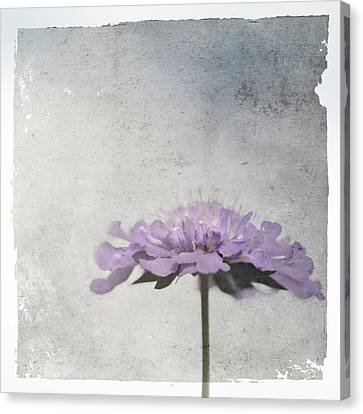 Canvas Print featuring the photograph Lilac by Annie Snel