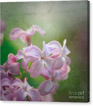 Lilac Dreaming  Canvas Print
