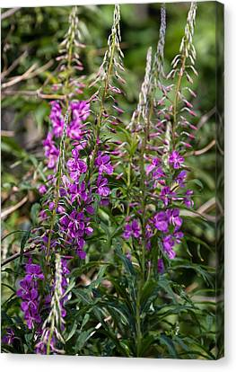 Canvas Print featuring the photograph Lilac Flower by Leif Sohlman