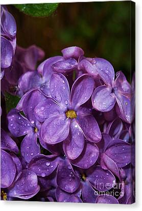 Lilac Flowers Canvas Print by AmaS Art