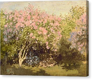 Lilac In The Sun, 1873 Canvas Print by Claude Monet
