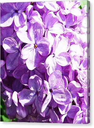 Lilac Canvas Print by Irina Sztukowski
