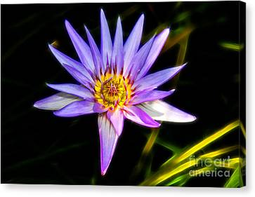 Lilac Lily Canvas Print by Mariola Bitner