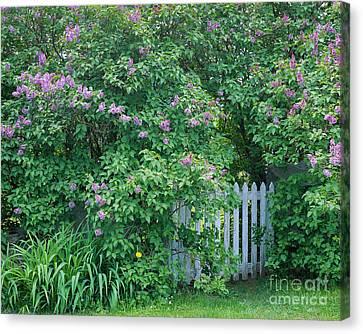 Lilac Season Canvas Print by Alan L Graham