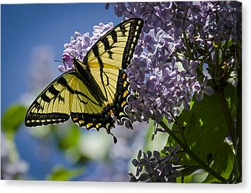 Lilac Tiger Canvas Print