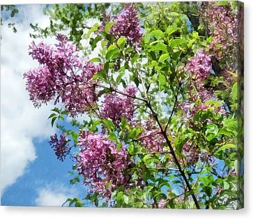Lilacs And Clouds Canvas Print by Susan Savad