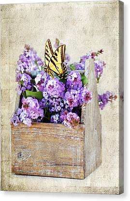 Lilacs And The Butterfly Canvas Print by Darren Fisher