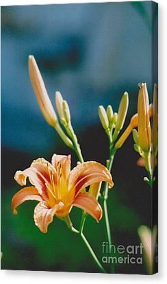 Lilies - 2 Canvas Print