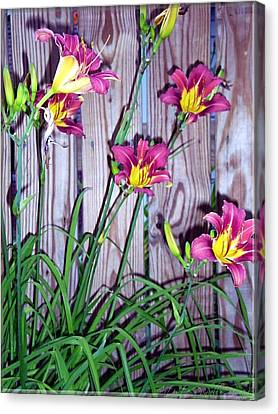 Lilies Against The Wooden Fence Canvas Print