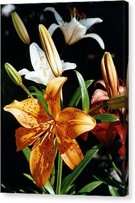Canvas Print featuring the photograph Lilies Assorted Colors by Robert Lozen
