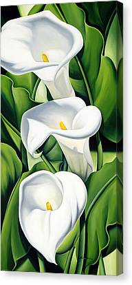 Lilies Canvas Print by Catherine Abel