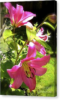 Lilies In The Garden Canvas Print by Sher Nasser