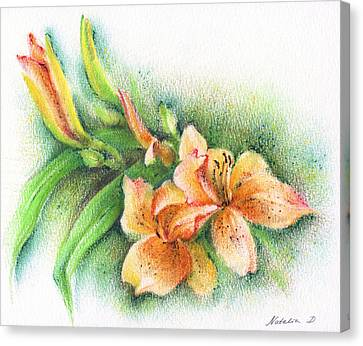 Canvas Print featuring the drawing Lilies by Natasha Denger