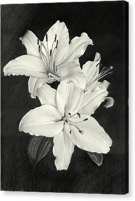 Lilies Canvas Print by Nicola Butt