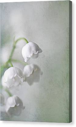 Lilies Of The Valley Canvas Print by Annie Snel