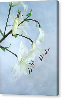 Lilies On Blue Canvas Print by Louise Kumpf