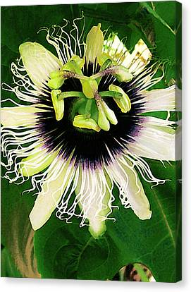 Passion Fruit Canvas Print - Lilikoi Flower by James Temple