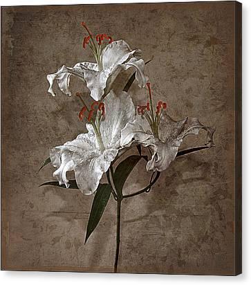 Canvas Print featuring the photograph Lilium Euratum #01 by Richard Wiggins