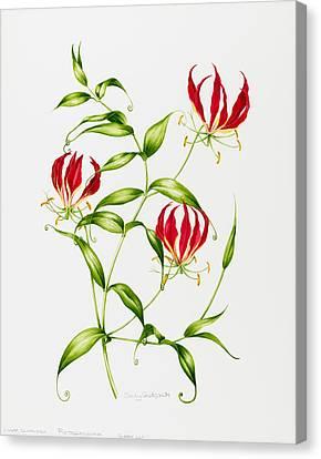 Lilium Rothschildiana Canvas Print