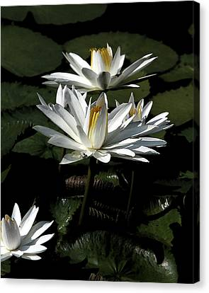 Canvas Print featuring the photograph Lillies by John Freidenberg