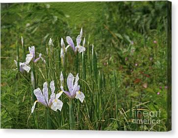 Lillies Of The Field Canvas Print by Jennifer Apffel