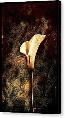 Lilly 2 Canvas Print by Mauro Celotti