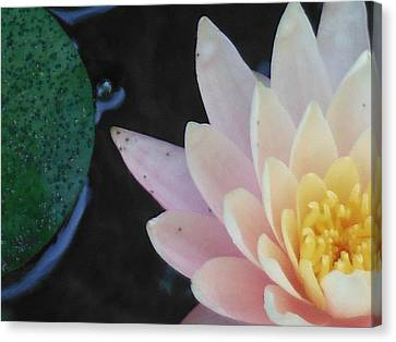 Lilly Canvas Print by Lori Thompson