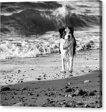 Lilly On The Beach Canvas Print