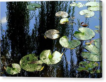 Lilly Pad Reflection Canvas Print by Frozen in Time Fine Art Photography