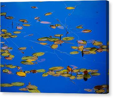 Lilly Pads Canvas Print by Dennis Bucklin