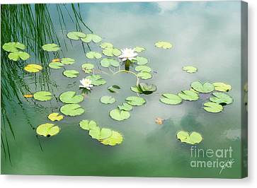 Canvas Print featuring the photograph Lilly Pads by Erika Weber