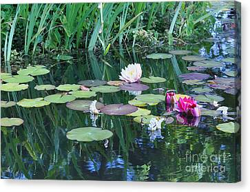 Lilly Pond At Mission San Juan Capistrano Canvas Print