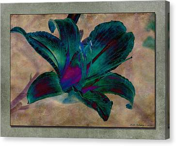 Lily 9 Canvas Print by WB Johnston