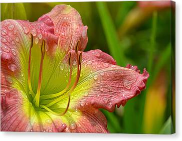 Lily After The Rain Canvas Print