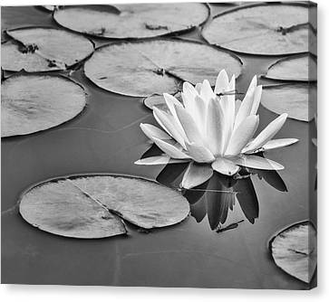 Lily And Dragon Fly Canvas Print by Peg Runyan