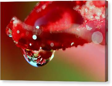 Canvas Print featuring the photograph Lily Droplets by Suzanne Stout