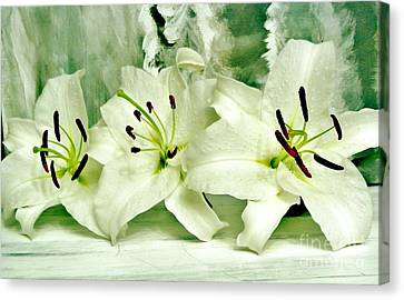 Lily Family Canvas Print by Marsha Heiken