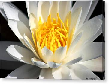Lily Flower Canvas Print by Marty Gayler