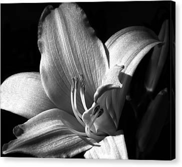 Lily Glisten Canvas Print by Camille Lopez