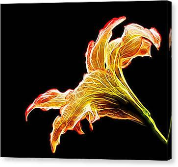 Lily Glow Canvas Print